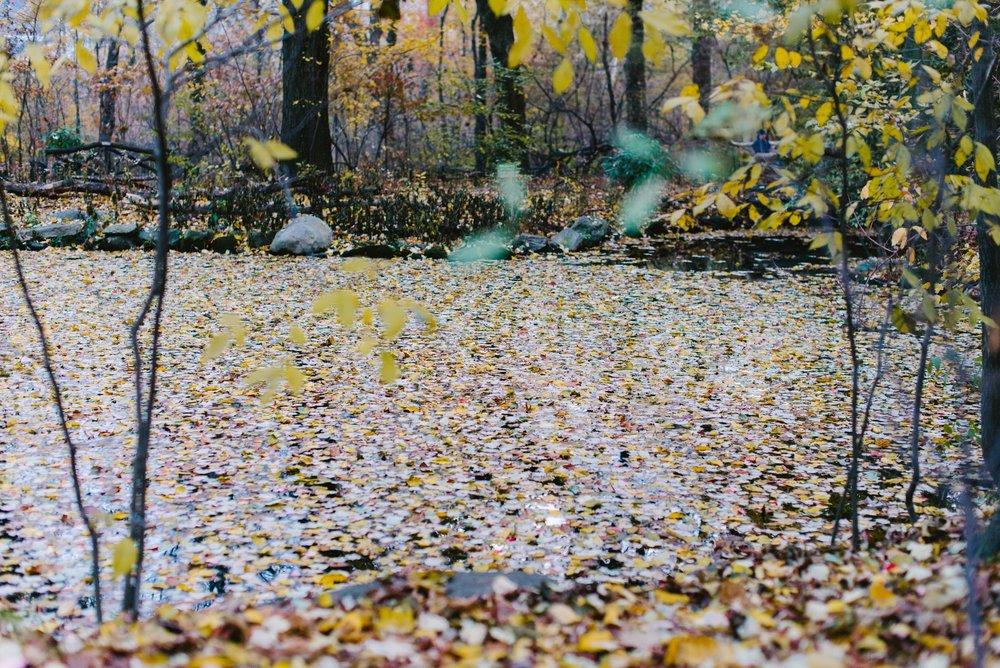 central park nov -26.jpg