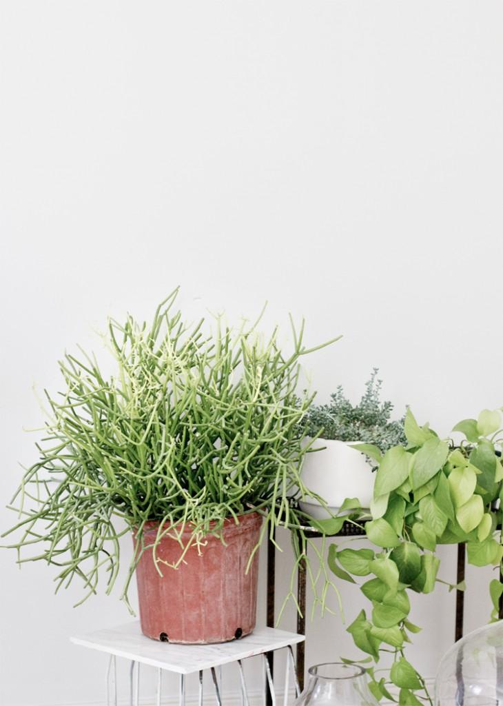 plants_1-730x1024.jpg