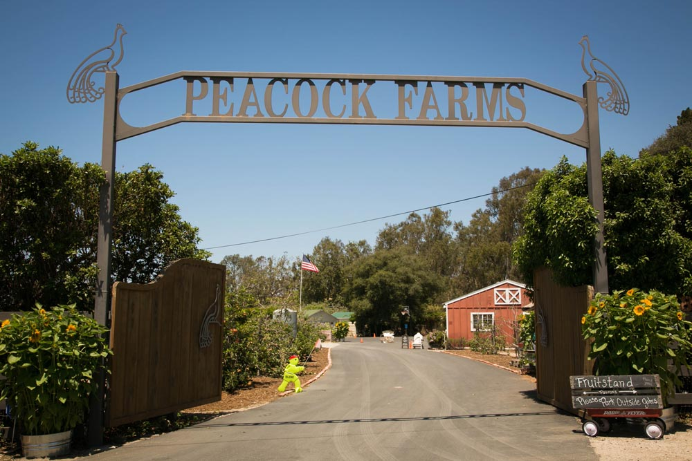 Peacock Farms Wedding001.jpg