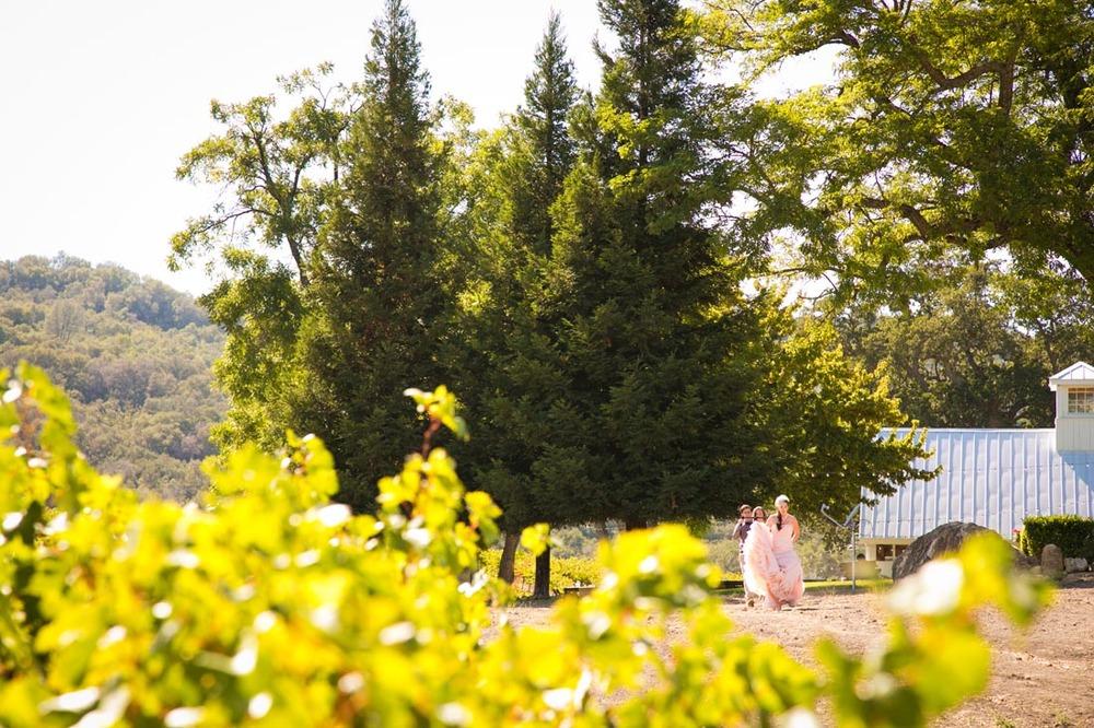 Hammersky Vineyards Wedding058.jpg