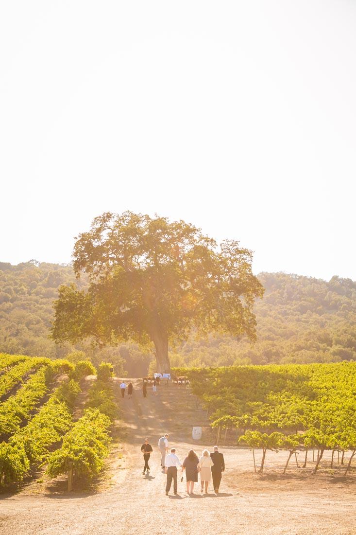 Hammersky Vineyards Wedding117.jpg
