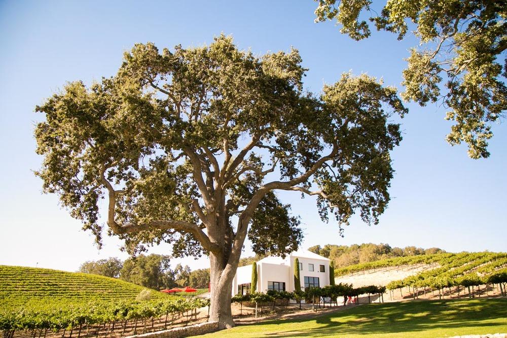 Hammersky Vineyards Wedding116.jpg