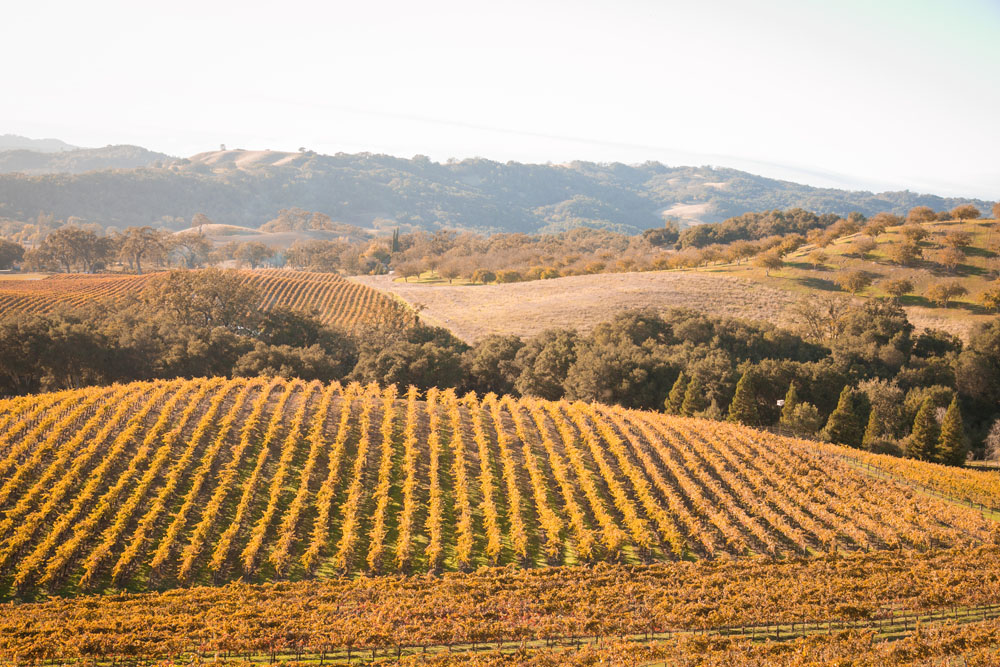 Paso Robles Wedding Photographer Opolo Vineyards 090.jpg