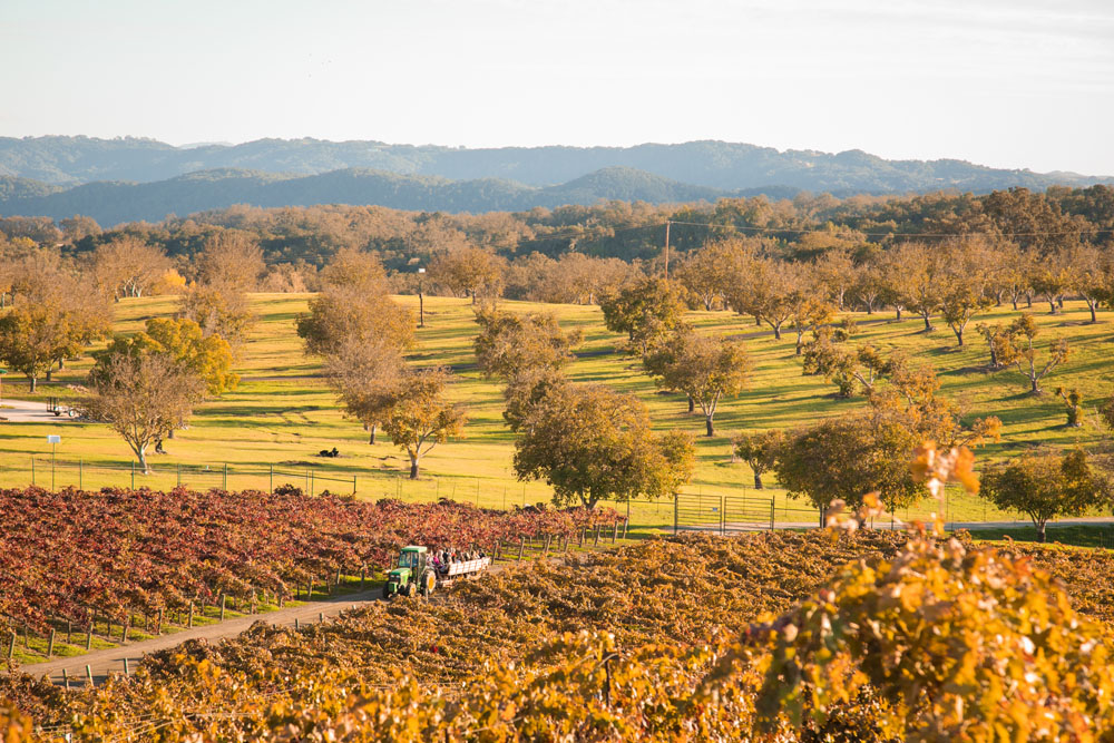 Paso Robles Wedding Photographer Opolo Vineyards 099.jpg