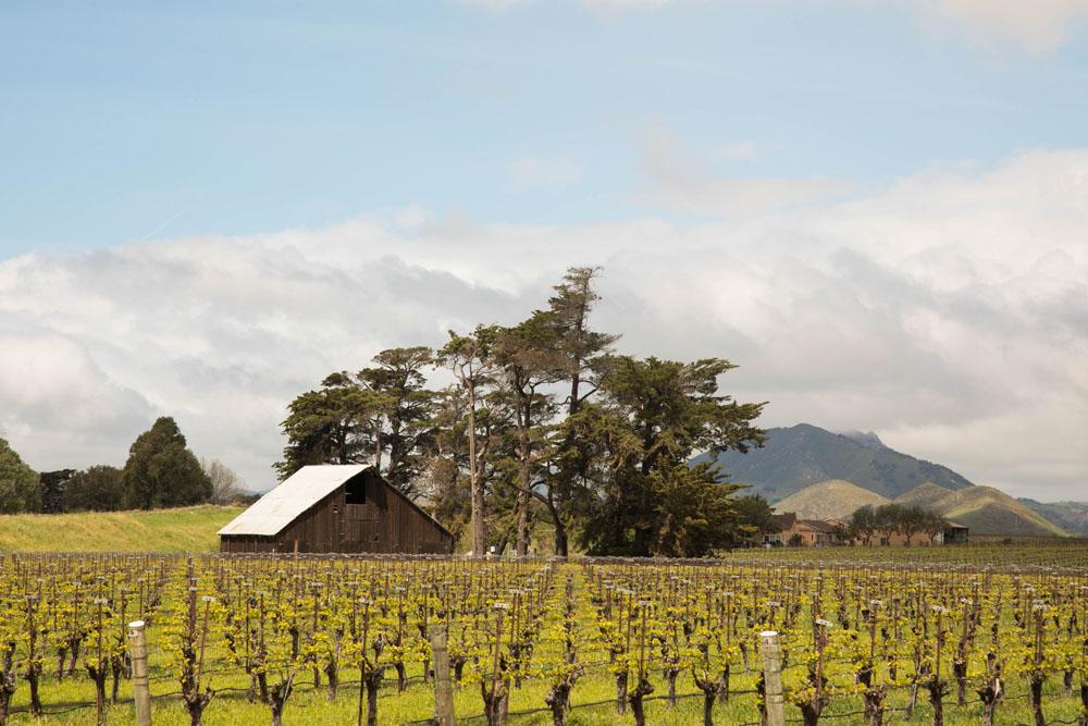 San Luis Obispo Wedding Photographer Biddle Ranch Vineyard 003.jpg