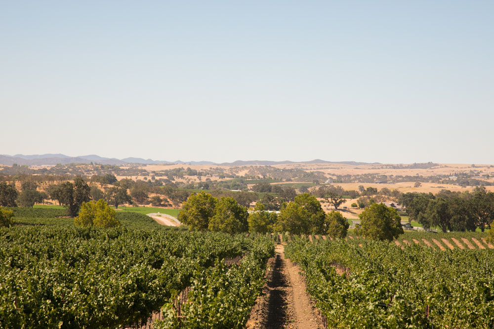 Paso Robles Wedding Photographer Windfall Farms 017.jpg