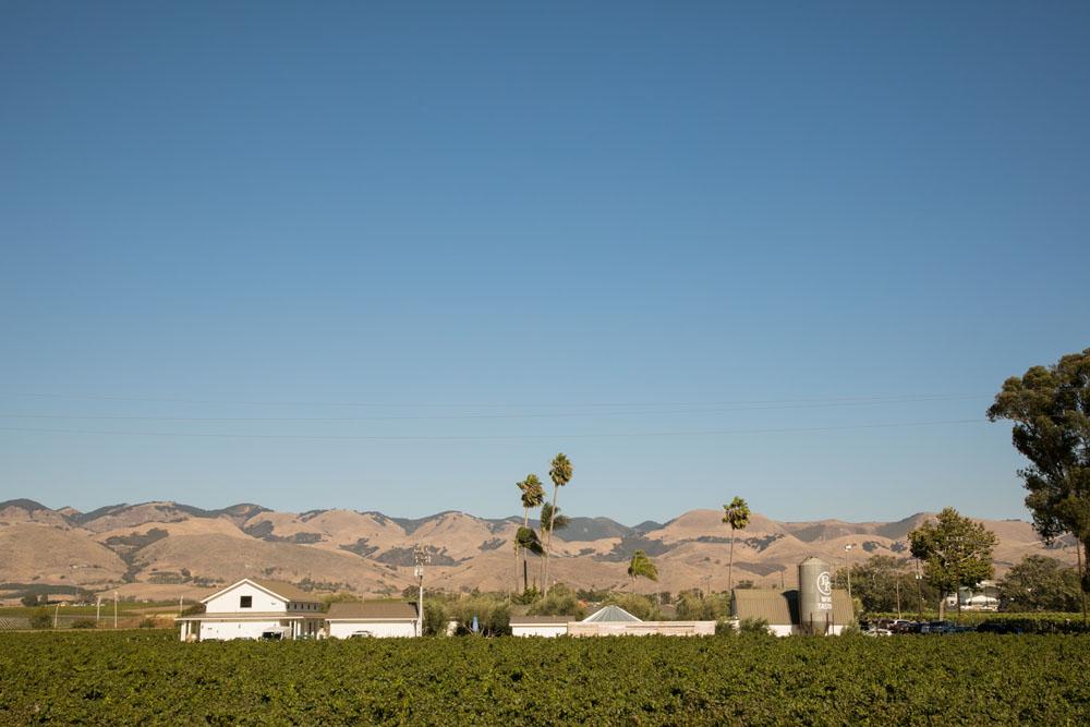 San Luis Obispo Wedding Photographer Biddle Ranch Vineyard 082.jpg