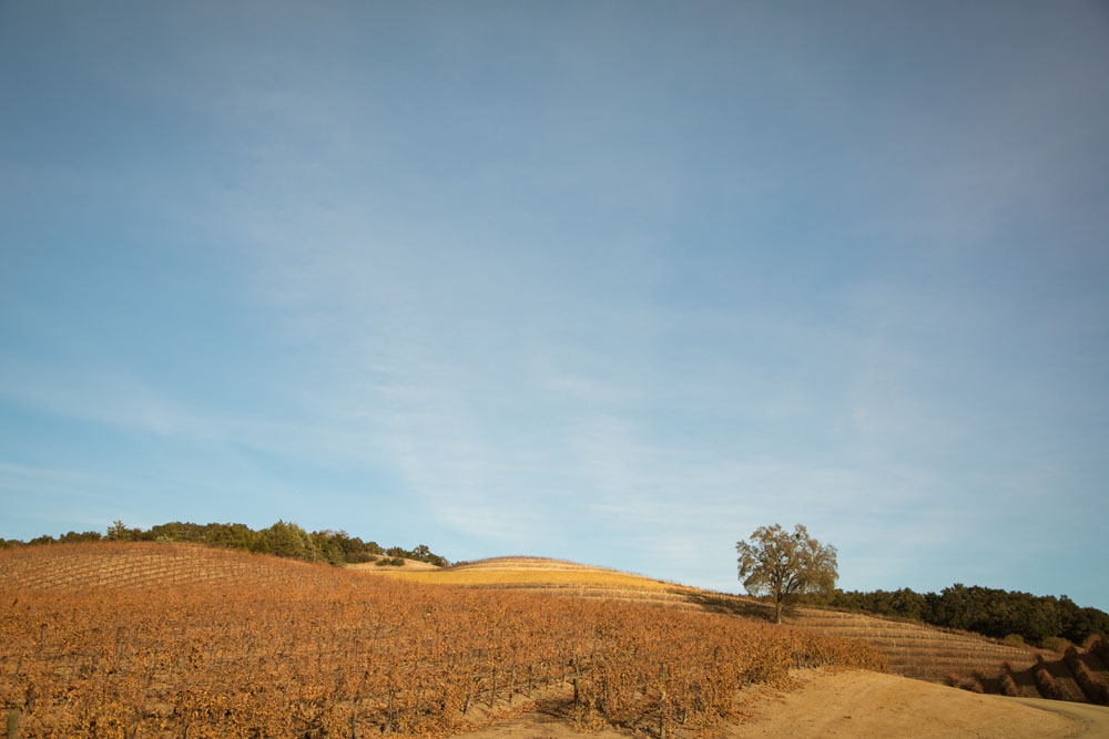 Paso Robles Proposal and Wedding Photographer Opolo Vineyards 001.jpg