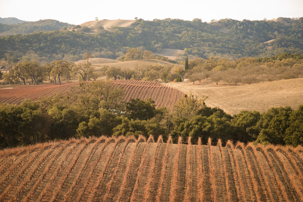 Paso Robles Proposal and Wedding Photographer Opolo Vineyards 002.jpg