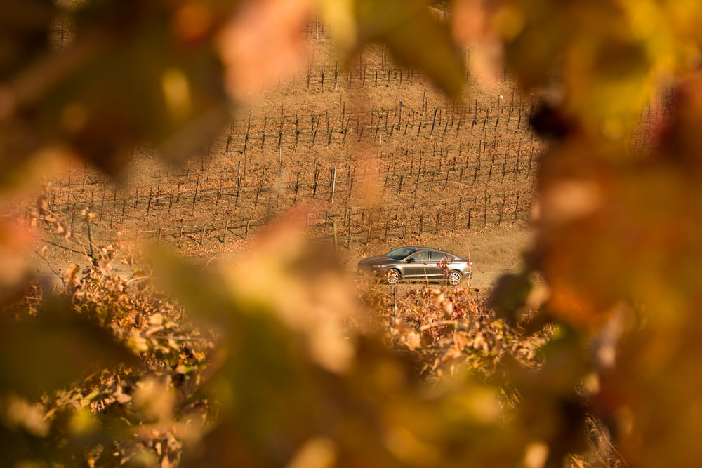 Paso Robles Proposal and Wedding Photographer Opolo Vineyards 003.jpg