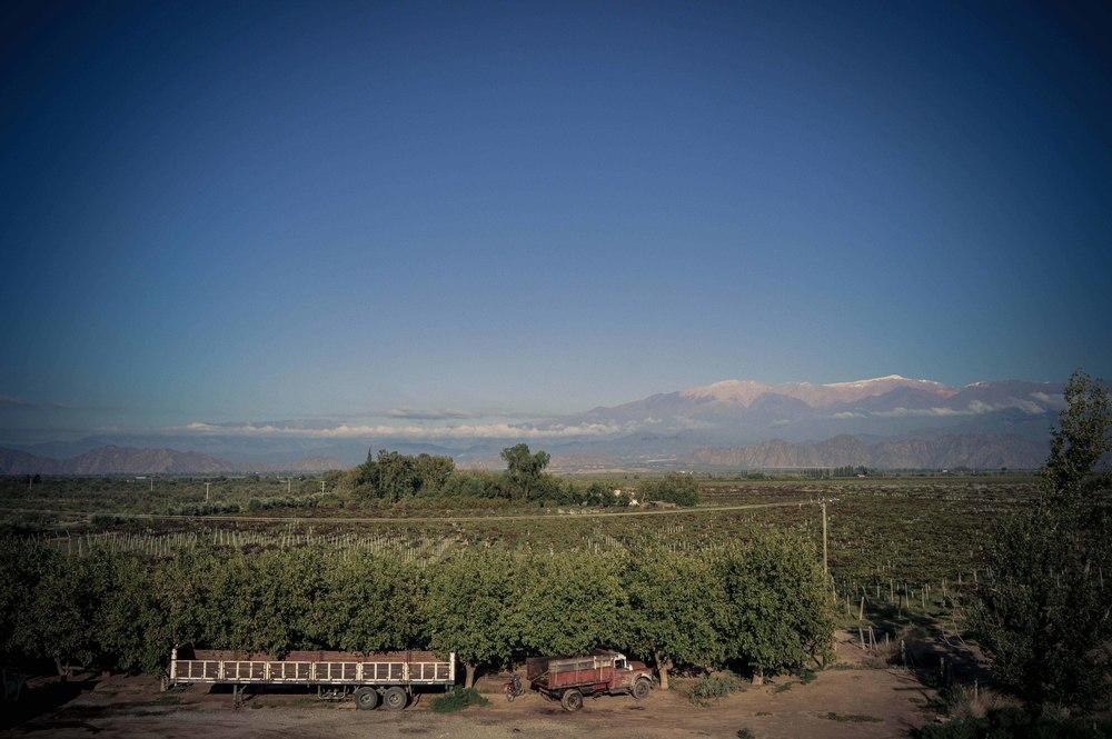 lariojana-vineyards(14).jpg