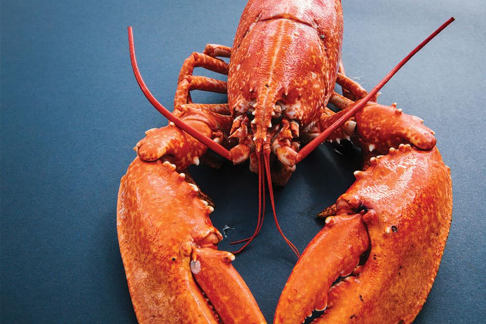 Lobster_4 copy.jpg