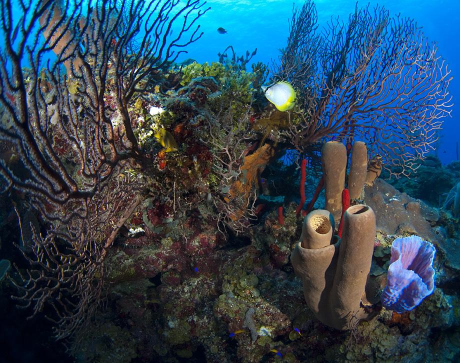 Coral form for snorkle.jpg