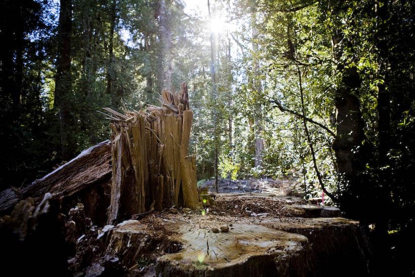 Deforestation in Tazmania