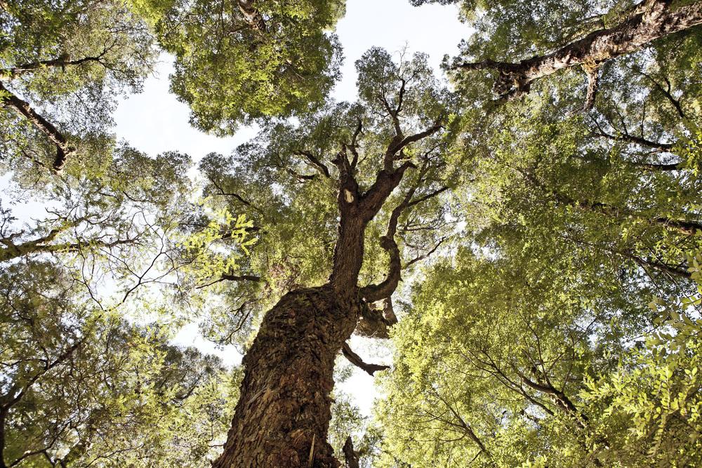 Tree Tops, Tazmania
