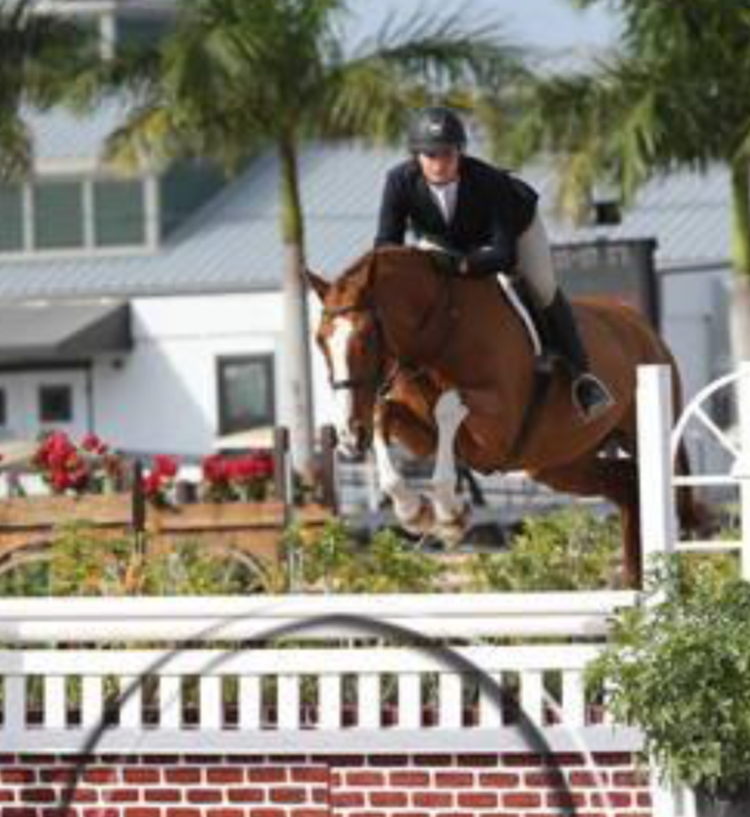 Kinsale is a 9yo 16.3 Canadian Warmblood gelding. Kinsale has had numerous championships from low children's to junior hunters. As a 7yo he won the 7yo Championships in Canada. He is a looker, mover and jumper; the whole package. Easy easy.