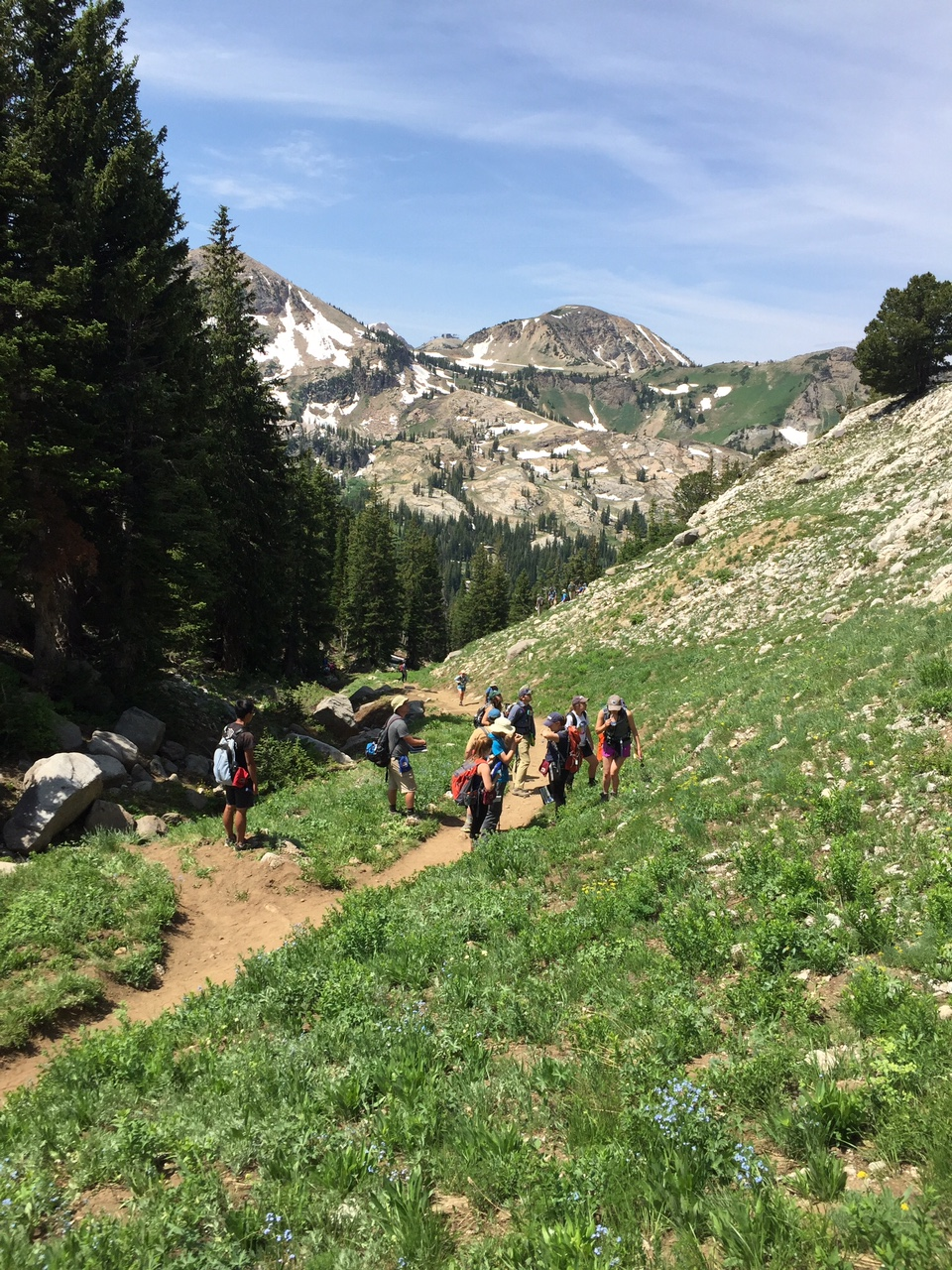 Geosciences Field School, Alta Stock - in search of periclase!