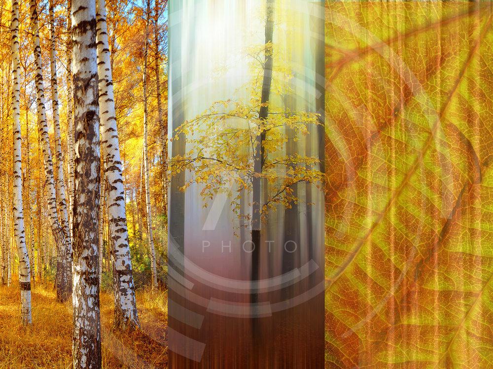RF_Collage_2LR.jpg