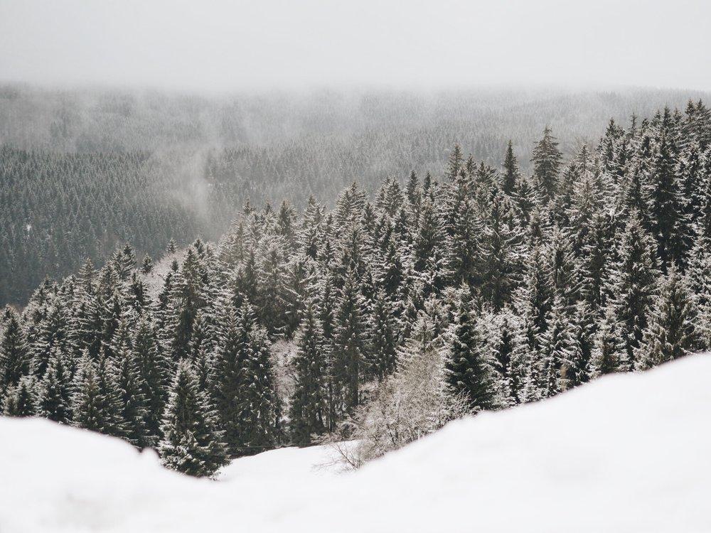 Woods Aschberg