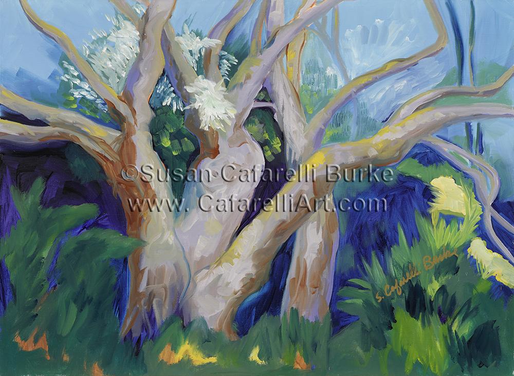 Arboretum Eucalyptus