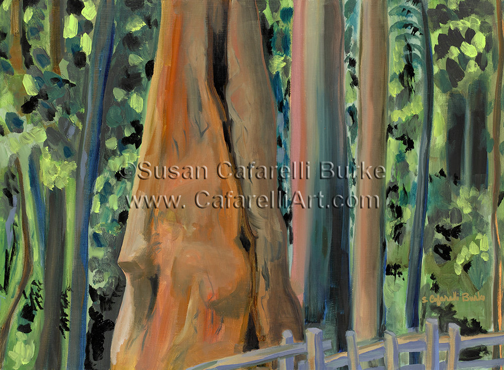 Redwood Stillness