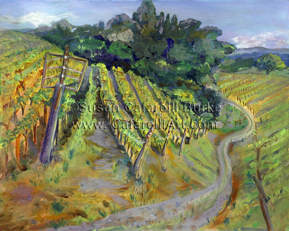 Bargetto Vineyard in Spring