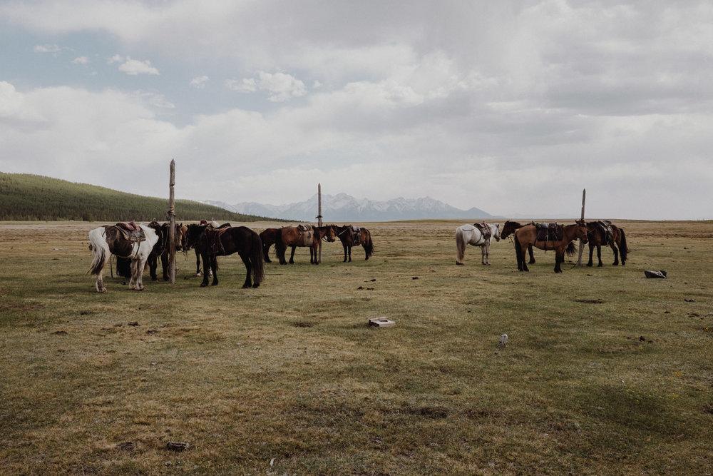 MongoliaTrek2018-8161.jpg