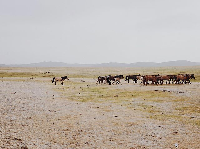 From Mongolia💛