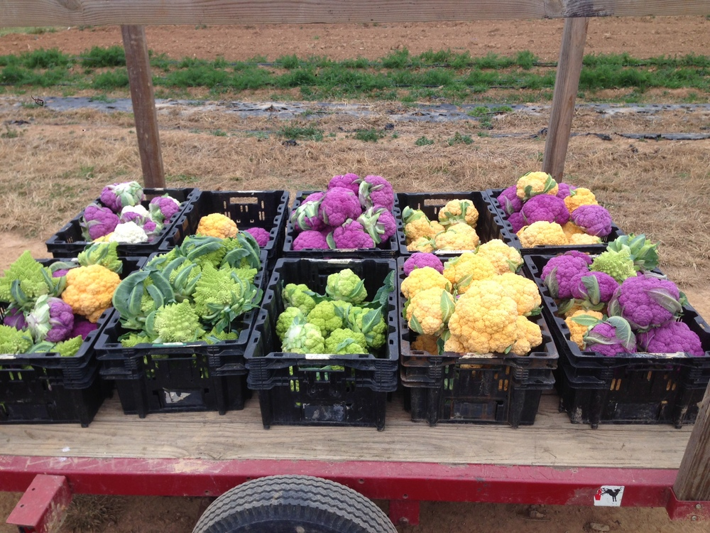 Some great looking vegetables