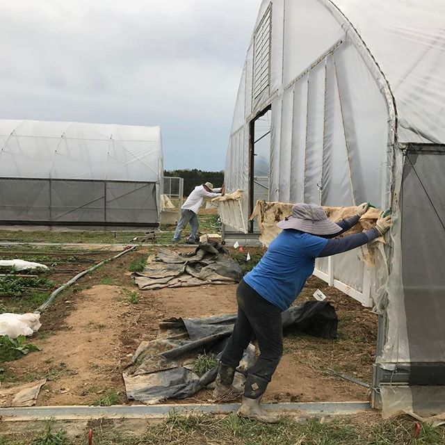 Moved the high tunnels on Wednesday. Had no idea the wind was going to be brutal on Thursday. We should have finished tying them down!