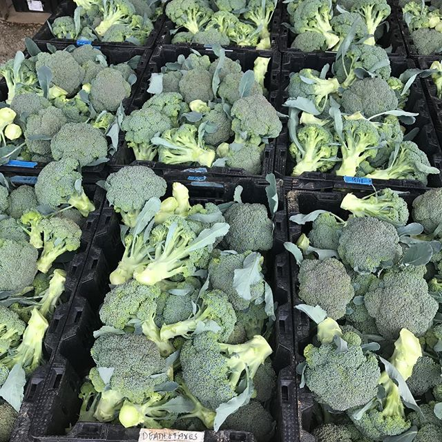 Delivering a lot of broccoli today! Try it at #weaverstreetmarket, #easterncarolinaorganics or your favorite restaurant #gocciolinadurham #stanburyraleigh