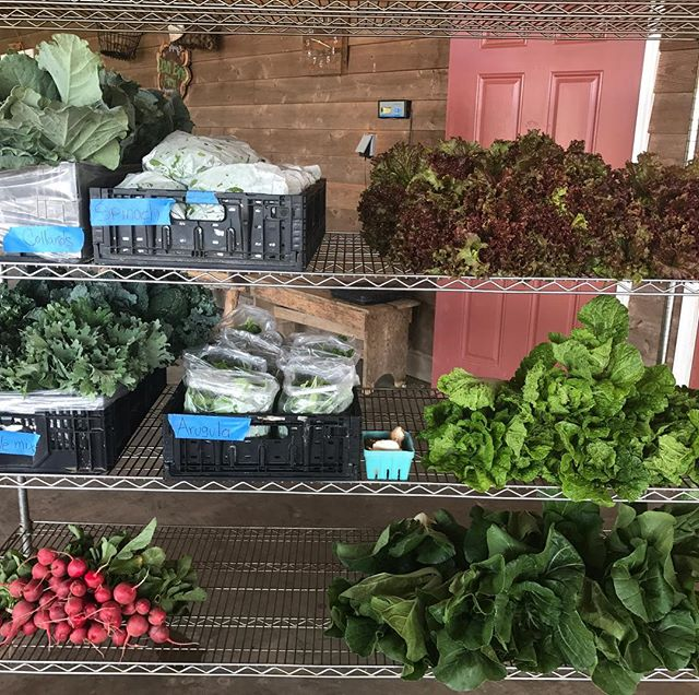 Love fall veggies! Spinach, arugula, kale, collards, lettuce, PAC choi, radish, Napa cabbage today from 12-6pm. See you at the farm.