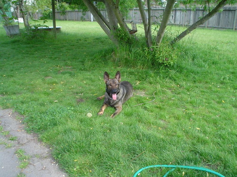 #39: Dante, taken April 20,2011 Passed Sept 29, 2011. Memorial post on my blog.