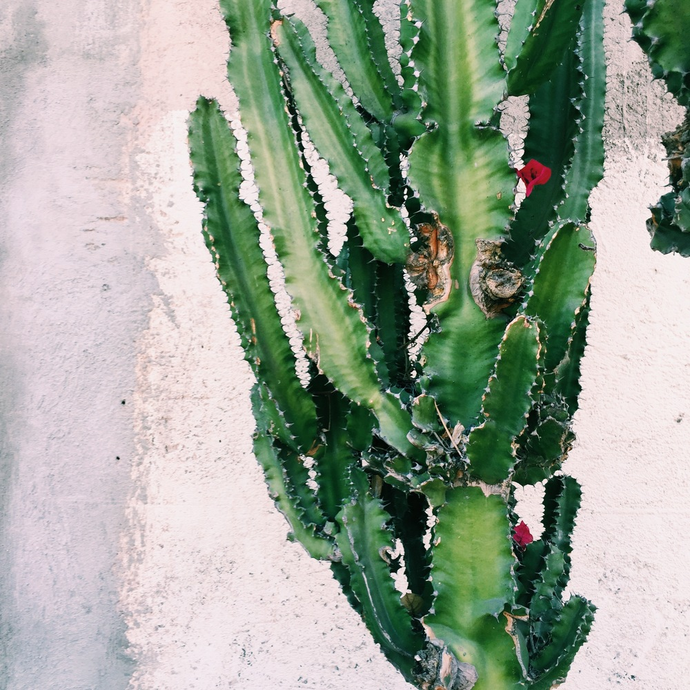 Cute cacti in the Art district.