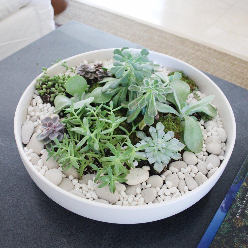succulent dish.jpg