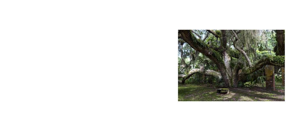 Page 0 oak.jpg
