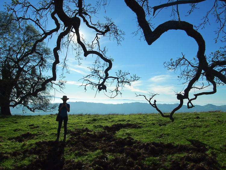 JOSEPH D. GRANT PARK, SAN JOSE, CALIFORNIA