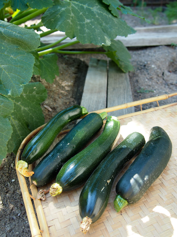 Homegrown Zucchini from our Backyard | vermilionroots.com