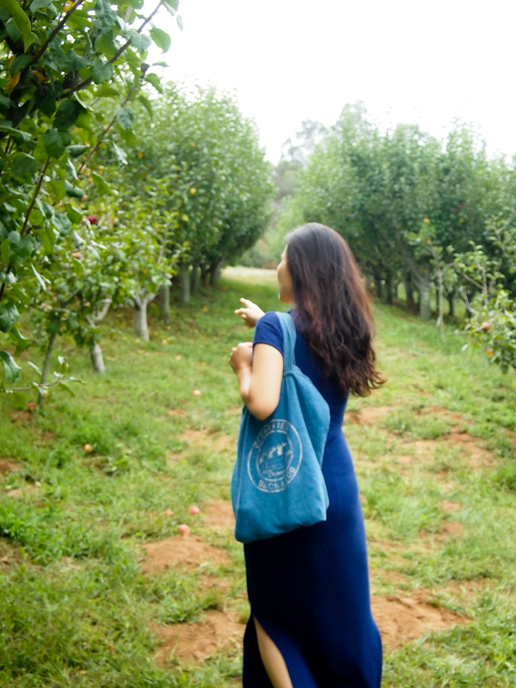 APPLE PICKING AT CLEARVIEW ORGANIC ORCHARDS IN WATSONVILLE, CALIFORNIA  | VERMILIONROOTS.COM.