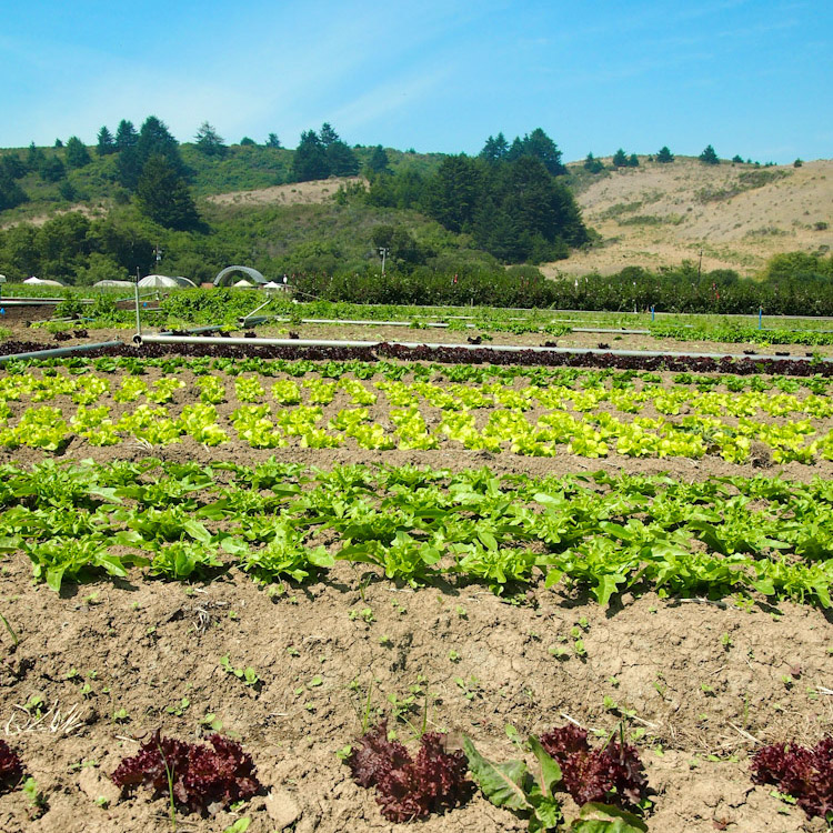 Fifth Crow Farm in Pescadero, California | vermilionroots.com
