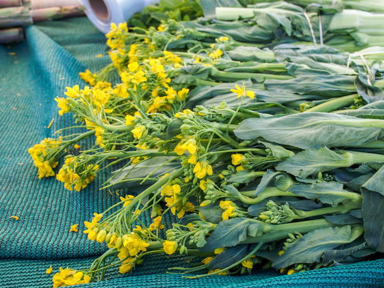 Broccoli yellow flowers image collections flower decoration ideas why does my broccoli have yellow flowers gallery flower decoration chinese broccoli with garlic gai lan mightylinksfo