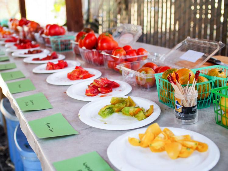 tomato-tasting-party.jpg