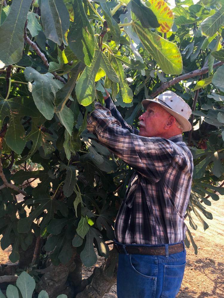 fig-farmer.jpg