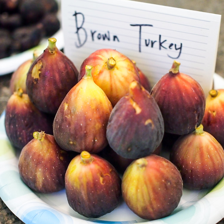 1s-brown-turkey-figs.jpg