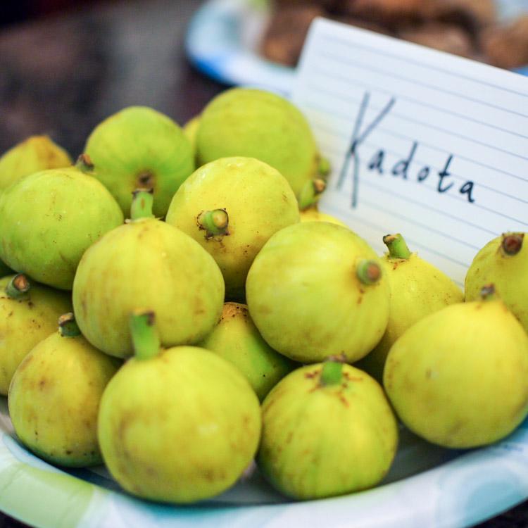 1s-kadota-figs.jpg