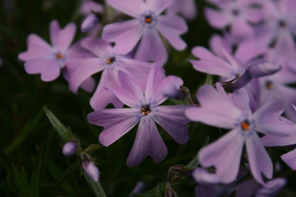 BL_Flowers_01.jpg