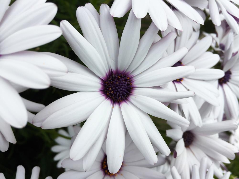 BL_Flowers_03.jpg