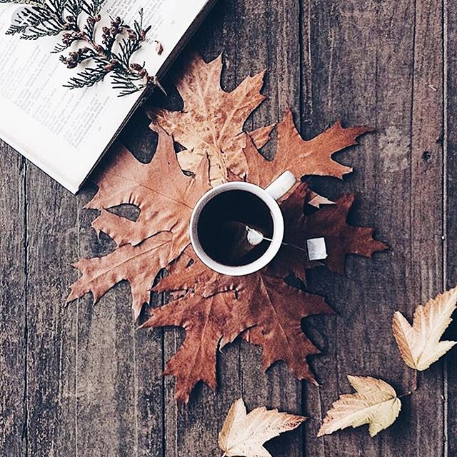 Just a cozy fall morning.... #BlainLorenn #ModernLuxe #Luxe #Apothecary #ModernApothecary #LuxeApothecary #Mood #Fall #Cozy #TeaTime