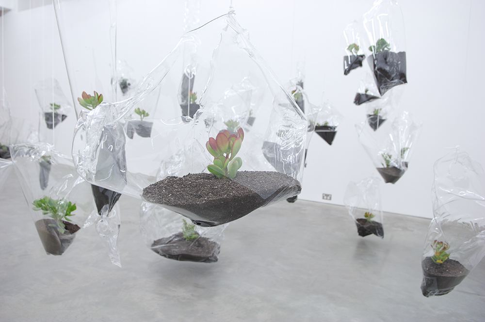 Mikala Dwyer - Swamp Geometry, 2008, Anna Schwartz Gallery, Melbourne