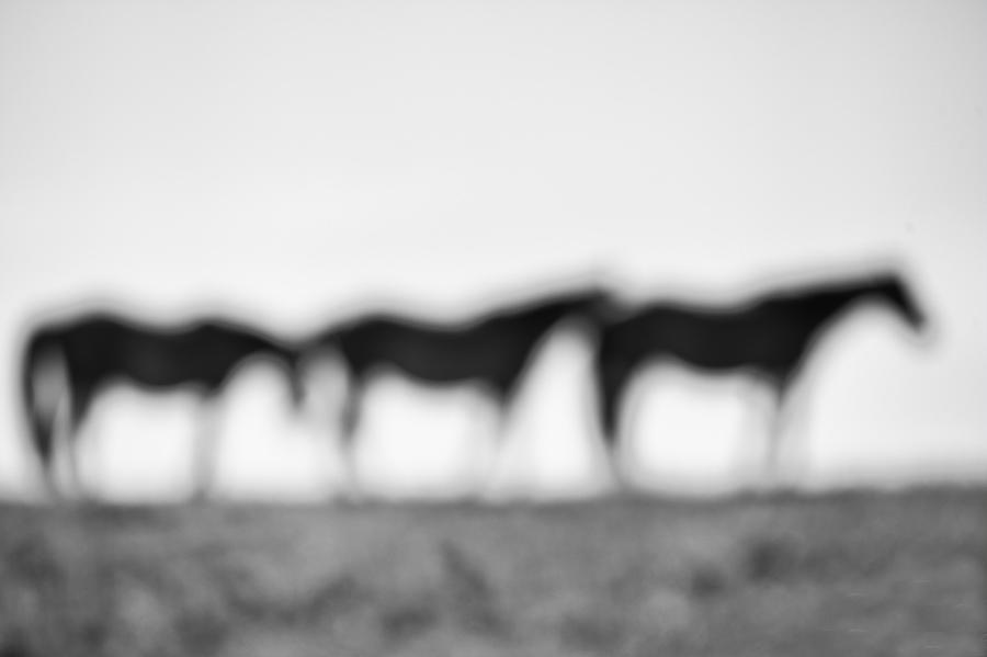 Horsehenge